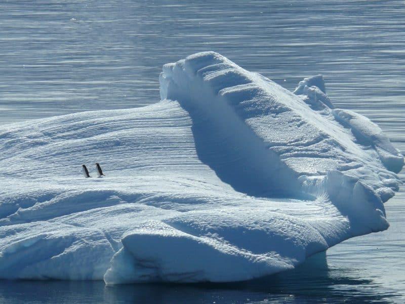 L'inquiétant réchauffement climatique au Pôle Sud
